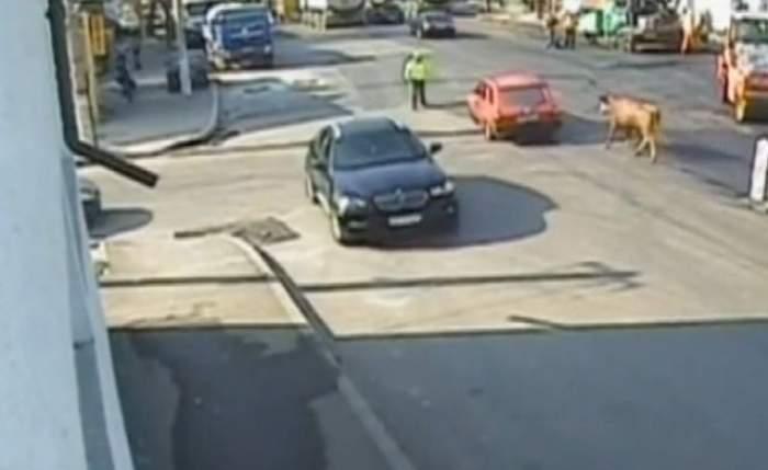 Un poliţist a fost atacat de un taur în mijlocul unei intersecţii din Brăila / Video