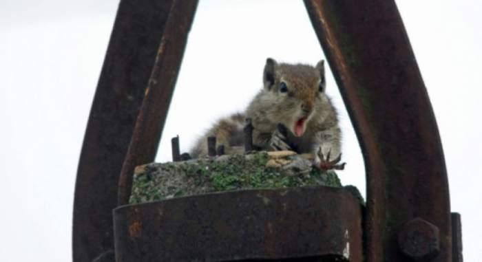 Coşmarul unei veveriţe. Reacţia ei a emoţionat o lume întreagă!