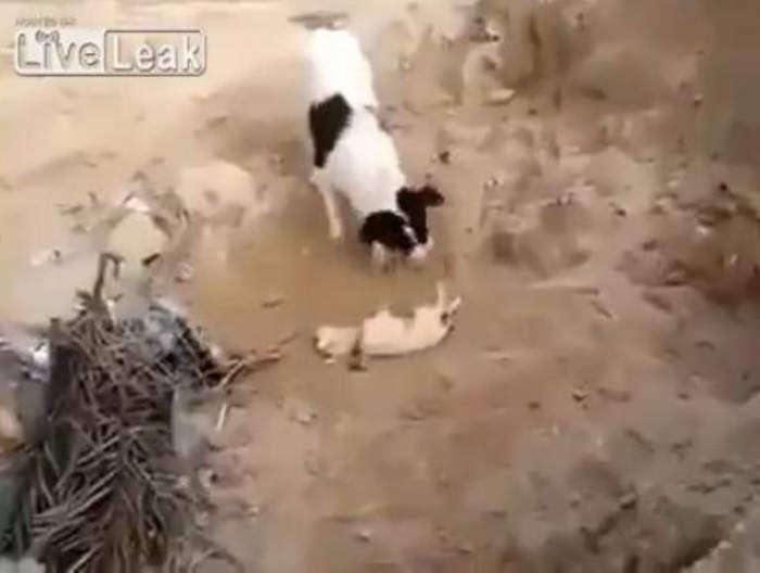Câinii, mai umani decât unii oameni? Ce a făcut acest patruped a impresionat o lume întreagă / Video