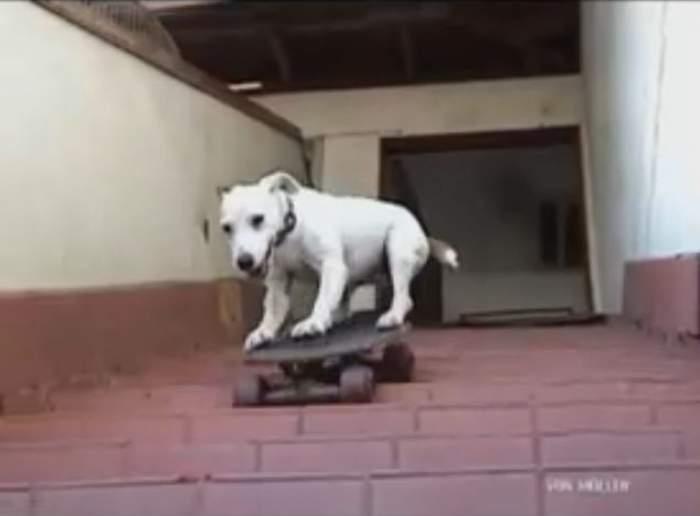 Incredibil! Uite ce nebun e câinele ăsta! /Video