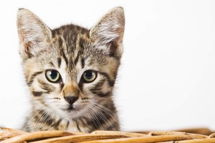 Un ucigaş a fost condamnat...cu ajutorul unei pisici!
