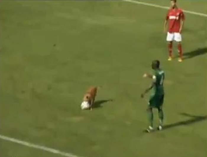 Trebuie să vezi asta! Un câine întrerupe un meci de fotbal! / VIDEO SUPER HAIOS
