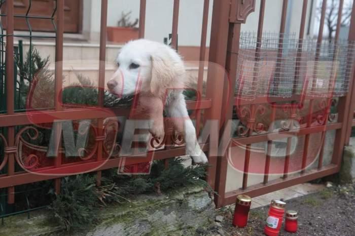 Încă îl aşteaptă... Căţelul lui Adrian Iovan nu se mai desprinde de poarta casei! E imaginea vie a suferinţei