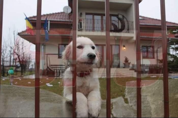 Teribila poveste a căţeluşului lui Adrian Iovan care a emoţionat o ţară întreagă! Vezi ce s-a întâmplat cu animalul!