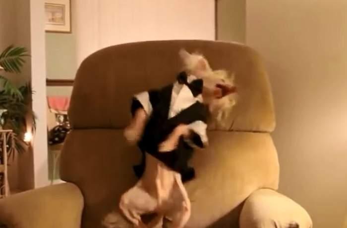VIDEO /  Câinele care nu se poate opri din dansat! Filmulețul a devenit viral pe internet