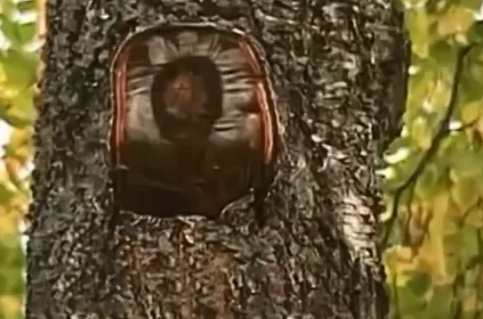 VIDEO/ Semn divin! A apărut chipul lui Iisus pe un copac, iar oamenii au început rugăciunile!