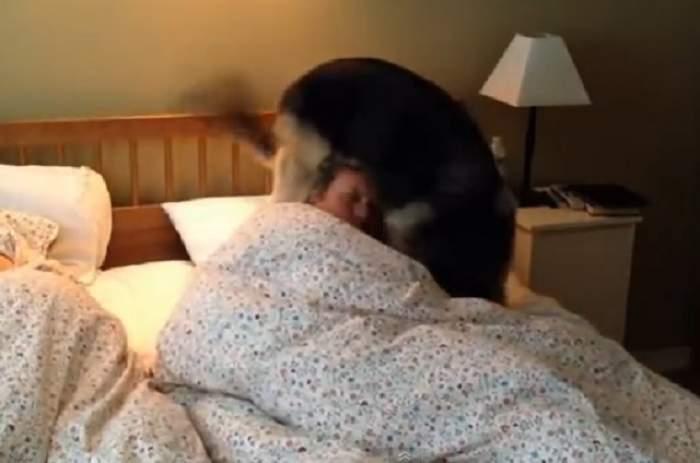 VIDEO /  Alarma nu te mai trezeşte? Ia-ţi un căţel! Imaginile care te vor face să râzi cu lacrimi