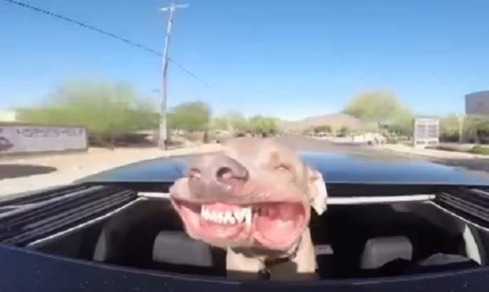 VIDEO  / Faceţi cunoştinţă cu cel mai zâmbăreţ căţel! Filmuleţul a adunat aproape un milion de vizualizări pe youtube