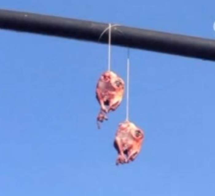 VIDEO/ Oamenii sunt îngroziţi! Capete de capră jupuite, atârnate de semafoare