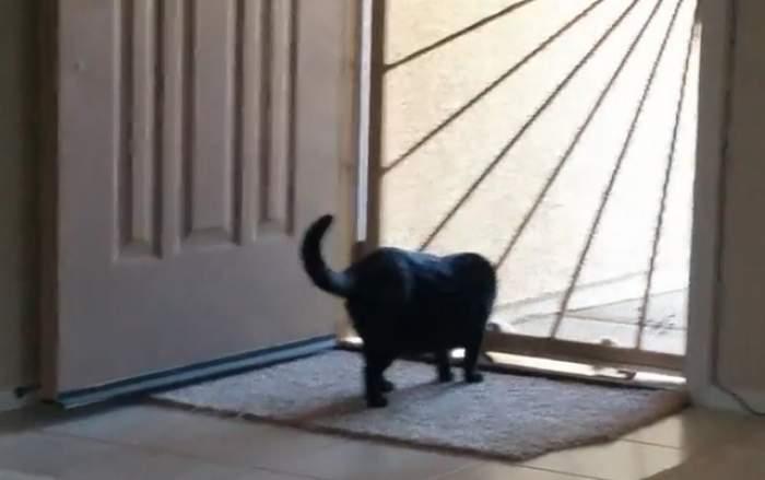 VIDEO/ Te va uimi! O pisică ar putea sparge o casă! De ce este capabilă felina