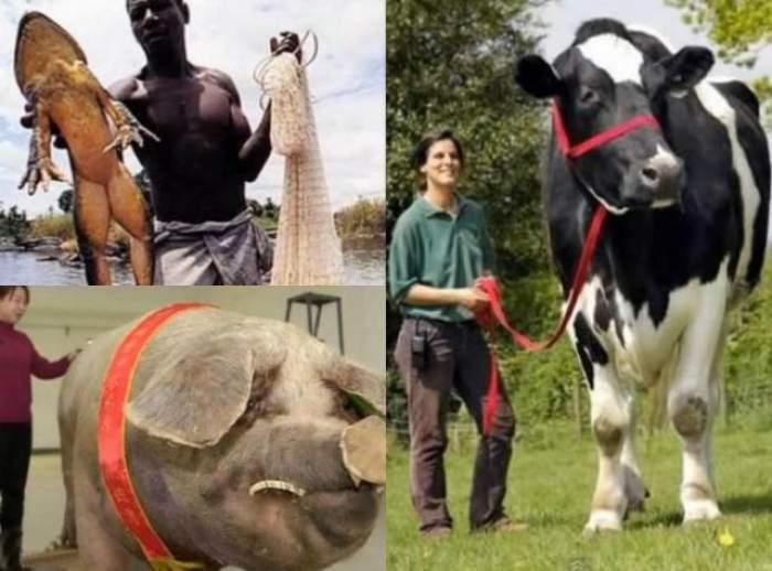 VIDEO / Sunt uriaşe! Top 10 cele mai mari animale din lume