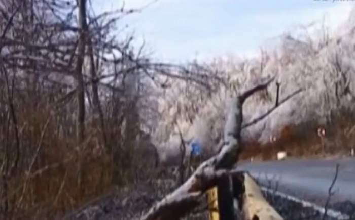 VIDEO / Fenomen bizar în România! Oamenii au rămas uluiţi când au intrat într-o pădure