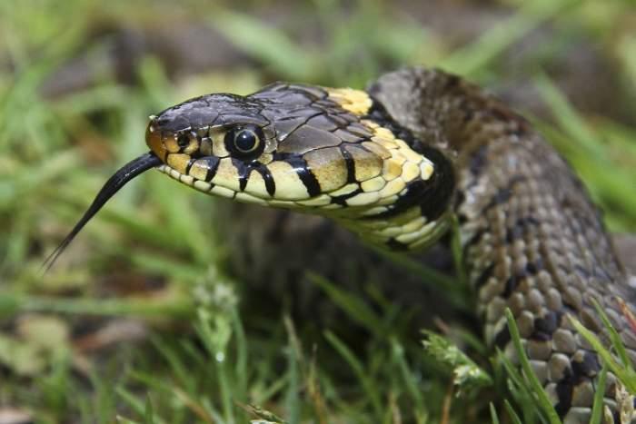 ÎNTREBAREA ZILEI: Miercuri - De ce se tem şerpii?