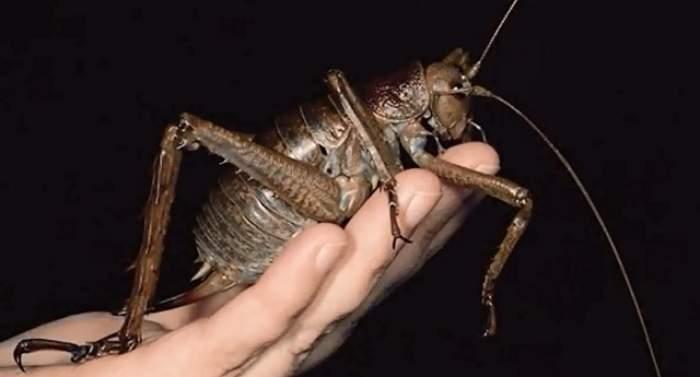 ÎNTREBAREA ZILEI - MIERCURI: Care este cea mai mare insectă din lume?