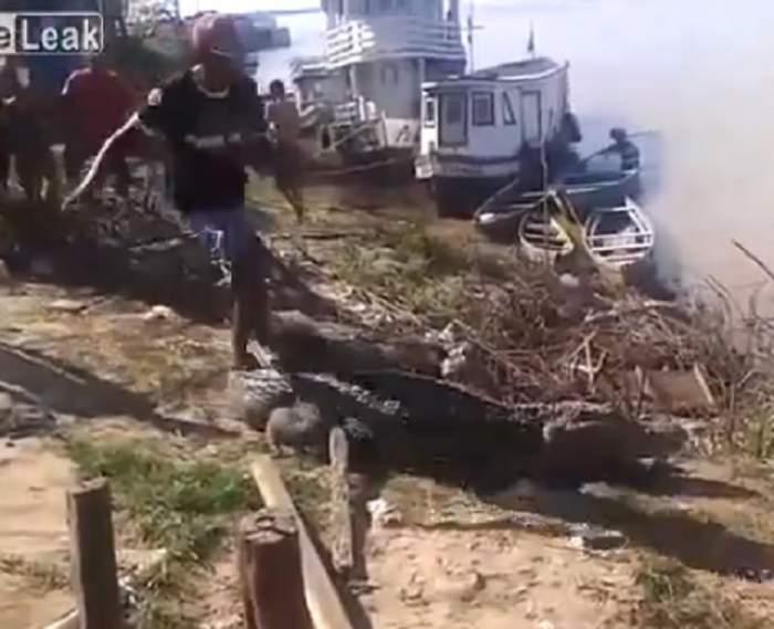 VIDEO / Nebun, nu jucărie! Uite ce i-a făcut un bărbat unui crocodil