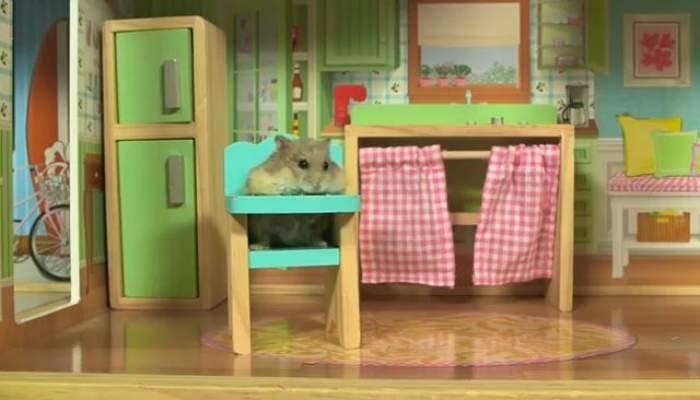 VIDEO / El este cel mai alintat hamster din lume! Are propria lui vilă!