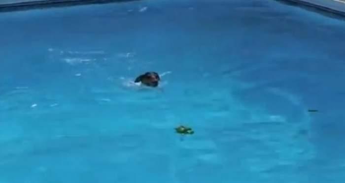 VIDEO /  Reacţia adorabilă a unui căţel atunci când îşi vede jucăria favorită în apă!