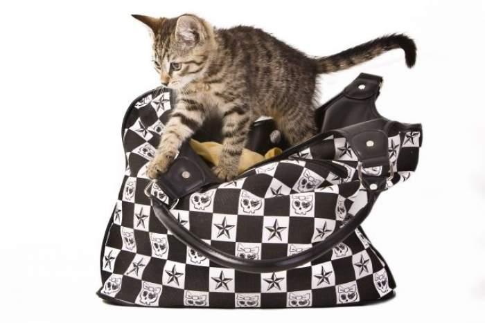 """Astăzi este ziua internaţională a pisicilor! Tu ce cadou i-ai făcut """"mustăcioasei"""" tale?"""