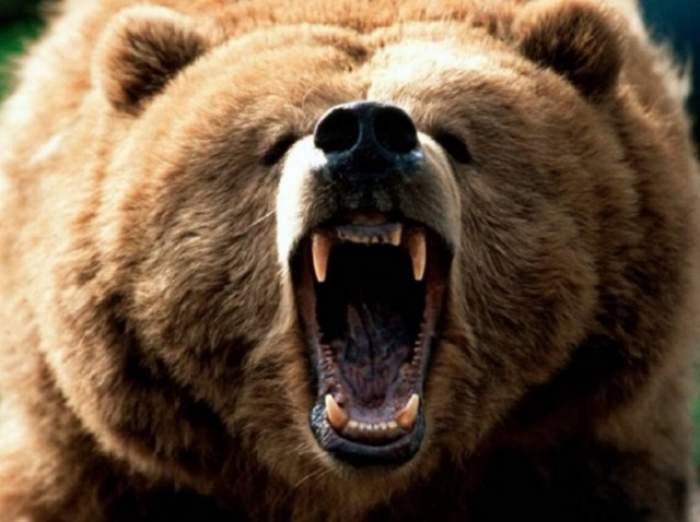 Înfiorător! Un bărbat din Covasna a fost sfâşiat de un urs
