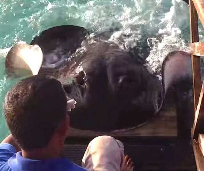 VIDEO / Turiştii au rămas uimiţi! O pisică de mare, lihnită! Ce a făcut ca să primească mâncare