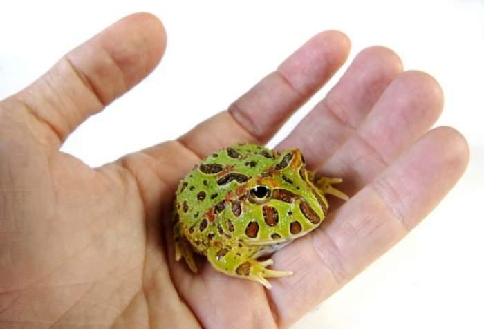 A ascuns o broască ţestoasă în chiloţi! Băiatul care a încercat să păcălească pe toată lumea pe aeroport