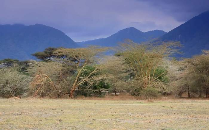 Descoperire INCREDIBILĂ în Tanzania! Este uriaș