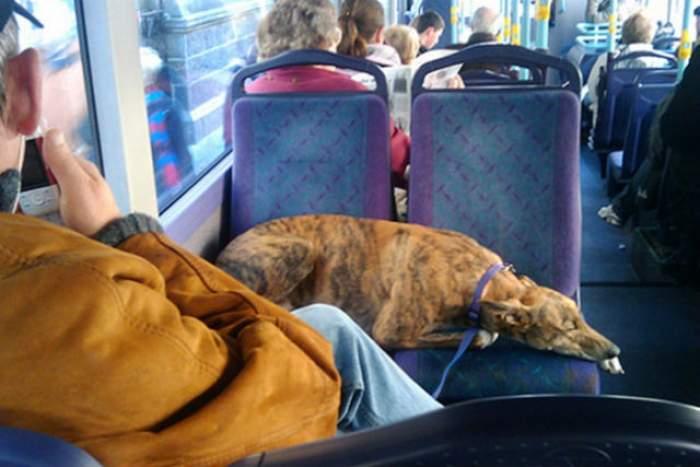 Se întâmplă într-un oraş din România! Câinii nu au voie să urce în autobuz fără bilet