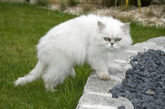 ÎNTREBAREA ZILEI: DUMINICĂ - Cum îţi afectează sănătatea să creşti o pisică?