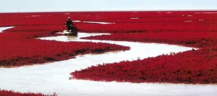 Un lac s-a transformat din verde în roşu, peste noapte. FENOMENUL RAR despre care TOATĂ LUMEA vorbeşte