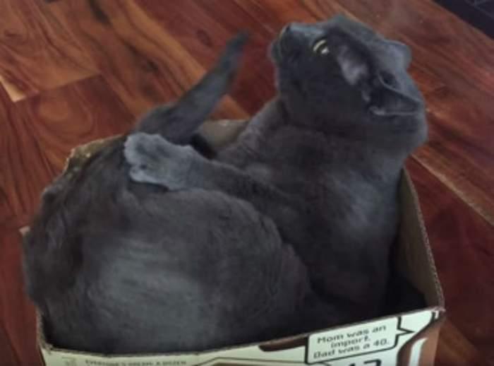 VIDEO / A cui e coada aceasta? Pisica Mars a vrut să facă legea în cutia ei