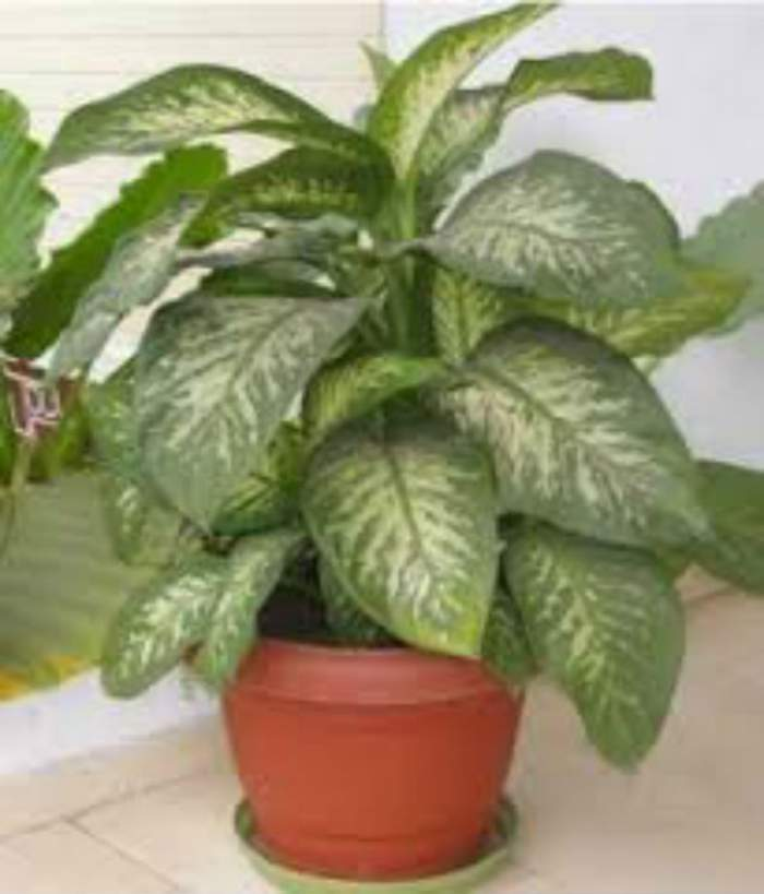 Cum să-ţi îngrijeşti plantele de apartament în sezonul rece! 4 trucuri folositoare oricărei gospodine