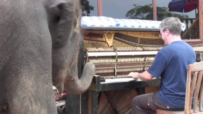 VIDEO / Reacţia neaşteptată a unui pui de elefant când aude muzică clasică! Pur şi simplu, adorabilă!