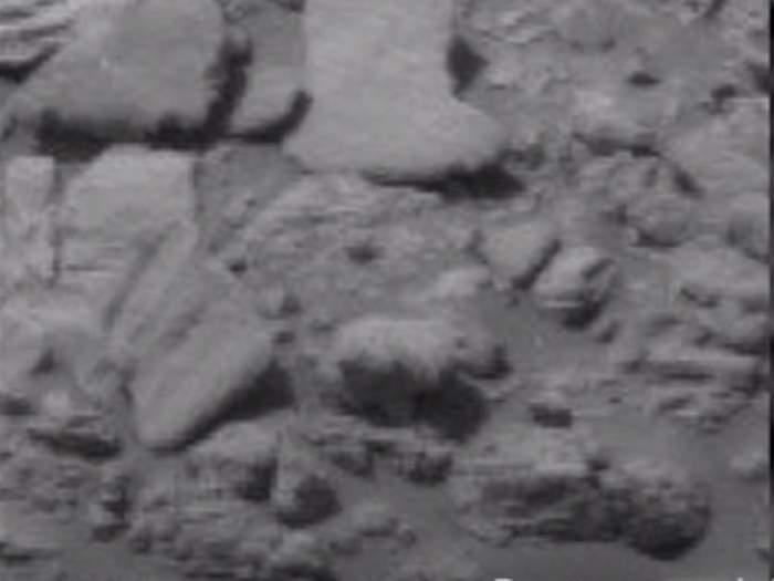 VIDEO / Un pui de urs polar, surprins pe Marte! Imaginea care a alertat NASA
