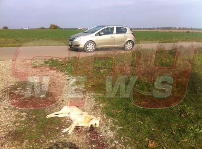 Alertă de gradul zero, după ce un câine a fost găsit împuşcat, în apropiere de Capitală!