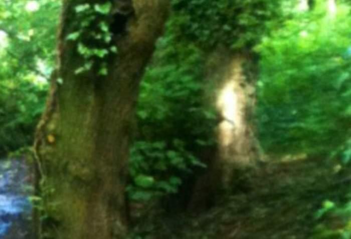 A mers în pădure şi a încremenit când a văzut asta!  Apariţia ÎNFRICOŞĂTOARE surprinsă de o pensionară