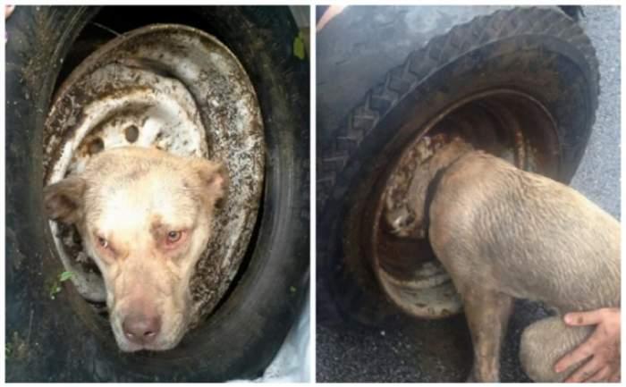 VIDEO / A rămas blocat cu capul în roata unei maşini, dar după i s-a întâmplat un lucru minunat! Povestea acestui câine te va emoţiona