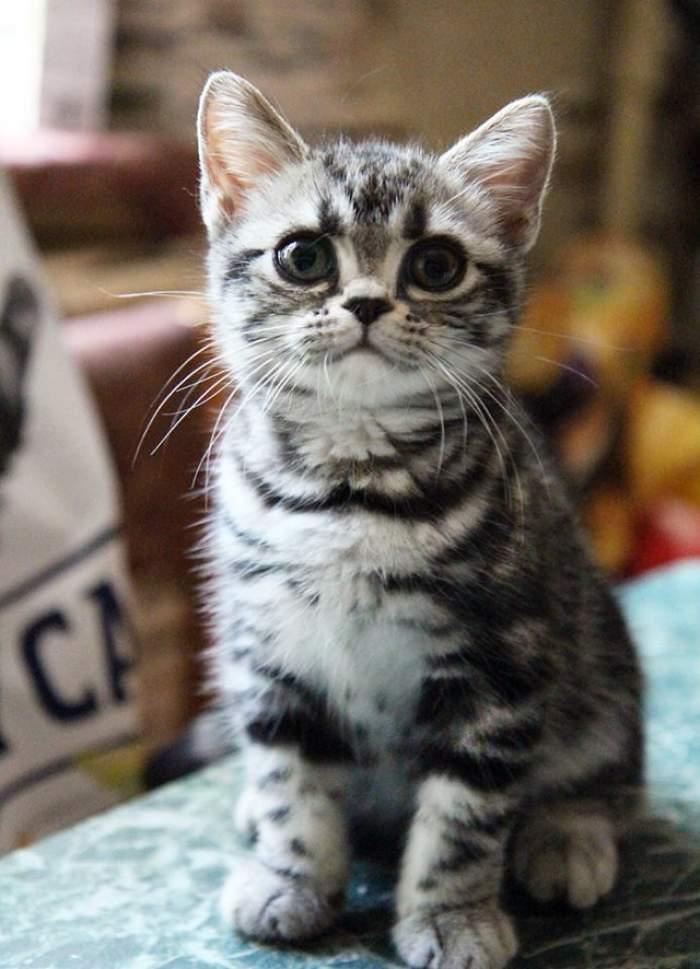 A comandat o pisică online! Când a deshis cutia a avut şocul vieţii. Nu o să uite niciodată ce a putut găsi în ea
