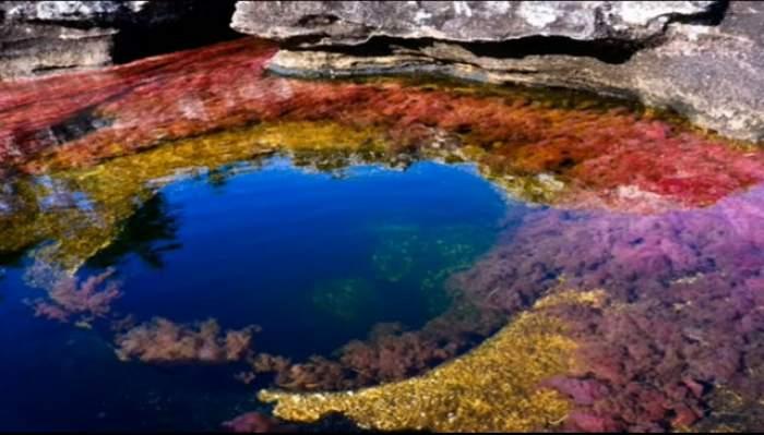 VIDEO & FOTO /  O minune a naturii! Vezi cum arată cel mai frumos râu din lume!