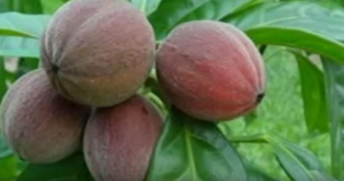 VIDEO / Au mâncat acest fruct vreme de câteva zile, iar rezultatul i-a lăsat fără cuvinte pe specialişti! Celulele canceroase au fost distruse