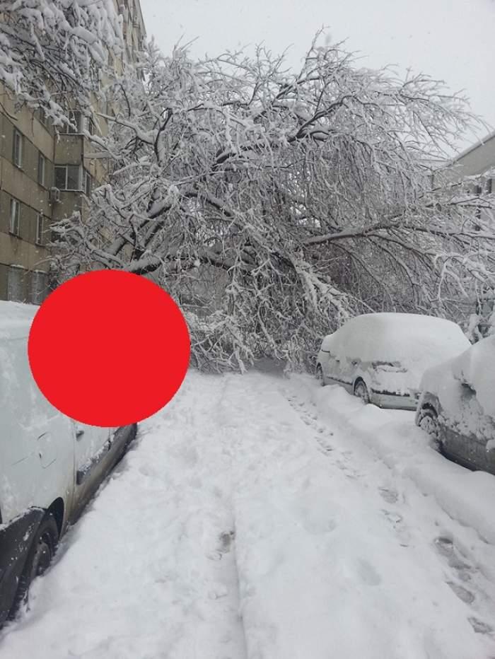 Imagine înfiorătoare a iernii! Un copac a fost fotografiat în timp ce se prăbuşea peste un trecător