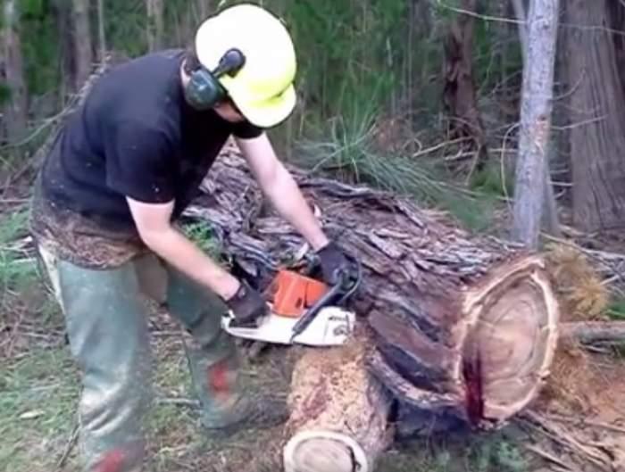 VIDEO / A băgat drujba într-un copac şi a început să curgă sânge! Filmuleţul care a şocat pe toată lumea