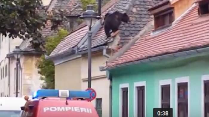 VIDEO / Imagini incredibile. Un urs se plimbă pe acoperişurile din Sibiu. Ce s-a întâmplat cu animalul