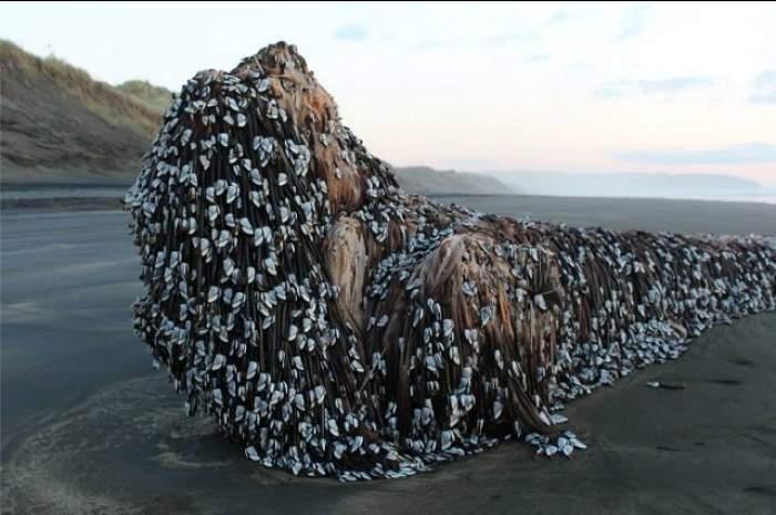 VIDEO / Un obiect gigant misterios a apărut pe o plajă din Noua Zeelandă! Oamenii nu găsesc explicaţia