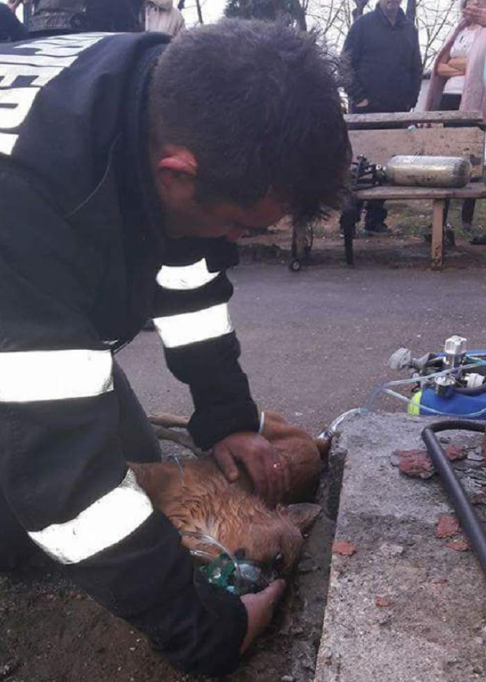 Cadou sinistru pentru pompierul care a salvat un câine făcându-i respiraţie gură la gură!