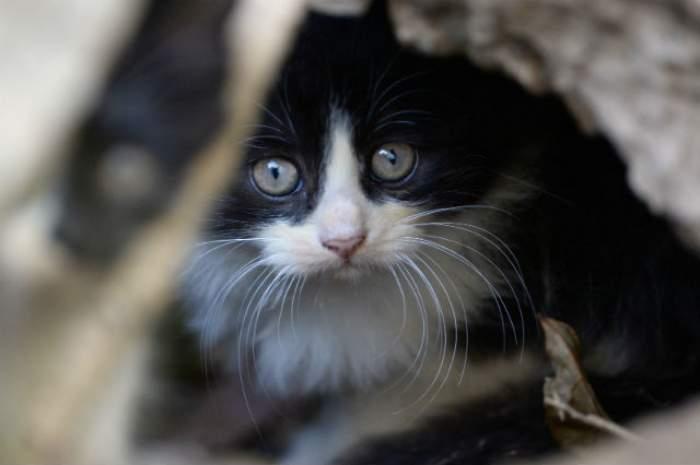 FOTO / Imagini de groază! O pisică avea un kilogram de blană încâlcită pe ea și a fost dusă la frizer. Ce s-a întâmplat cu ea