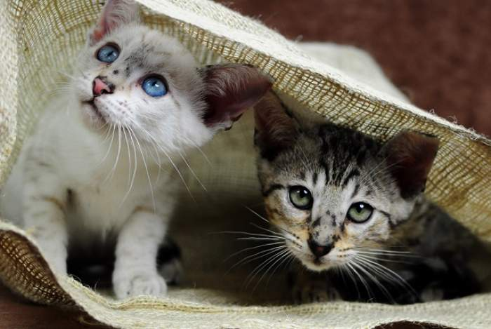 """De ce este bine să avem pisici în casă! Sunt """"terapeuţi cu blană"""""""