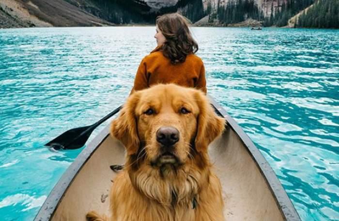FOTO / Povestea impresionantă al lui Aspen, cel mai popular căţel de pe internet!
