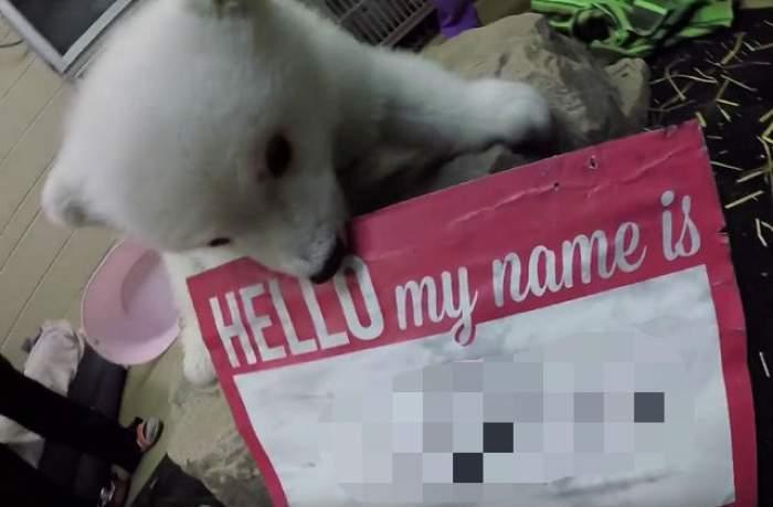 VIDEO / Ţi-l aminteşti? Acum câteva săptămâni nu avea nume, dar tocmai a primit unul! Uite cum se numeşte ursuleţul polar îndrăgit de tot Internetul!
