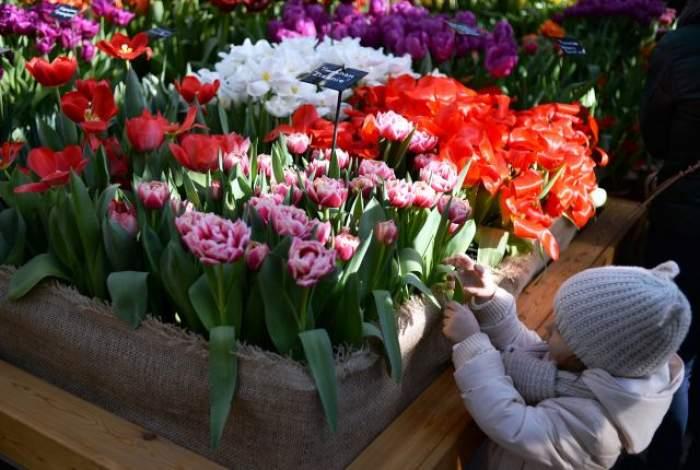 Cum va fi ziua de Florii! Potrivit tradiției populare, așa va fi și de Paște