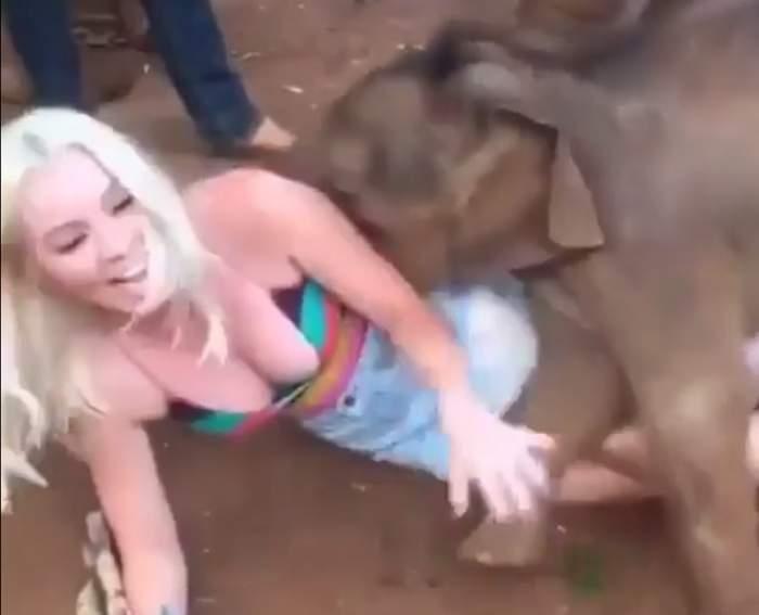 VIDEO DEMENŢIAL / Ce i-a făcut unei blonde siliconate elefănţelul curios!